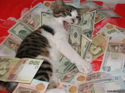 Cat & money photo