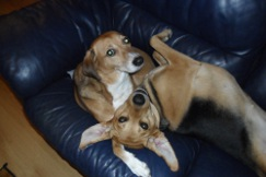 Honey & Lucky on sofa photo