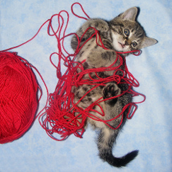 Kitten with wool photo