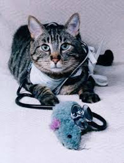 cat with stethoscope photo