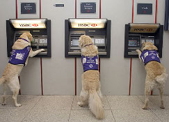 Dogs at cashpoint photo